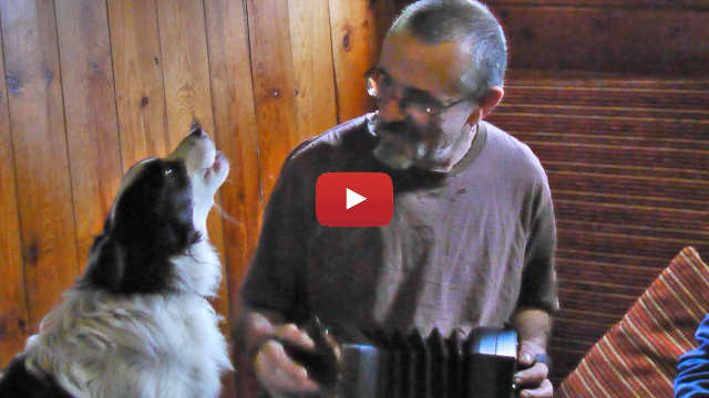 The skipper of the schooner Trinovante accompanies a singing dog on the anglo concertina - video image link.